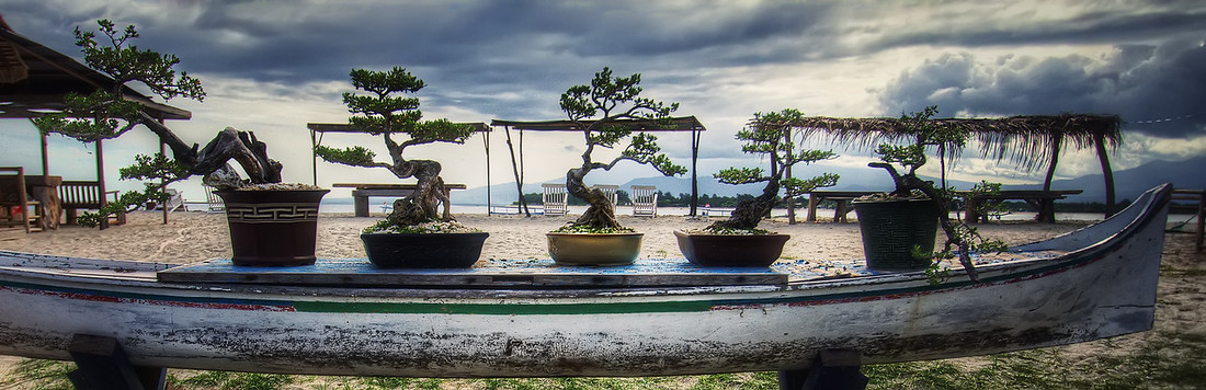 Boat full of Bonsai
