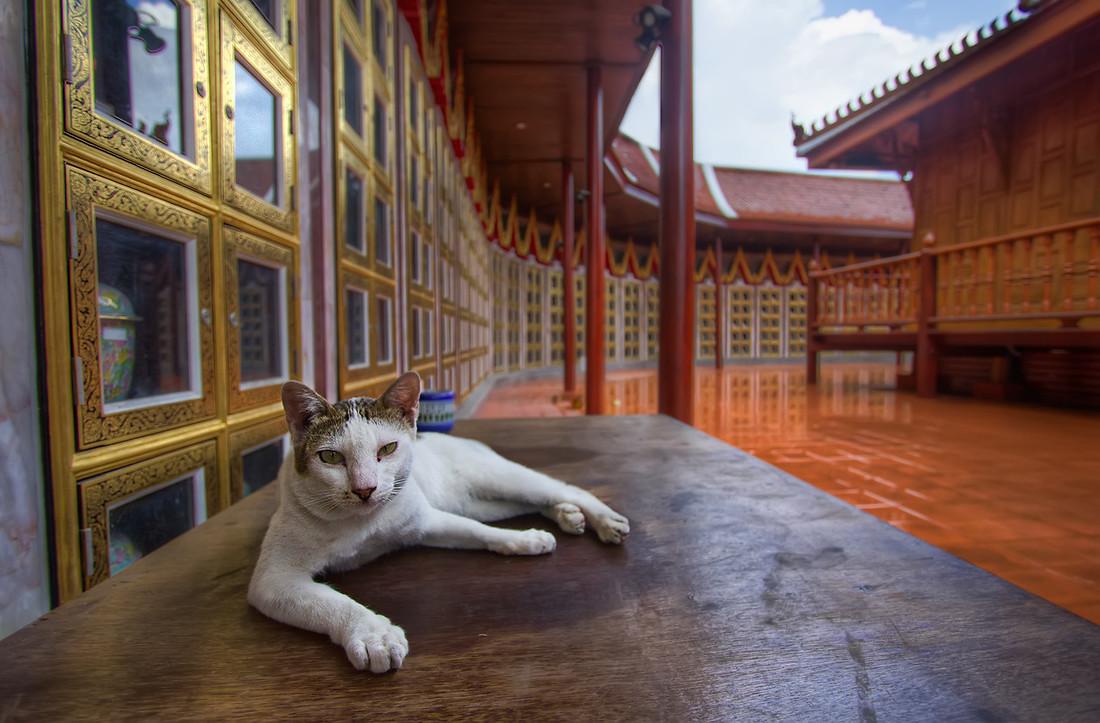 Feline Temple
